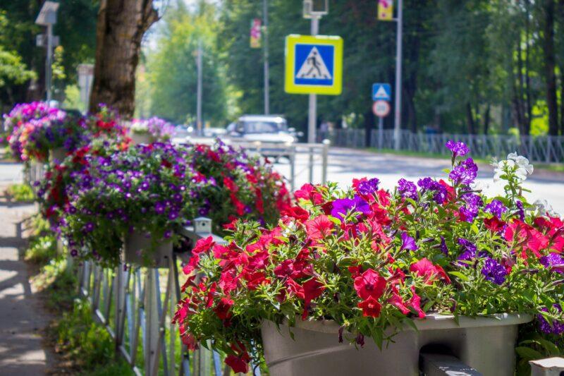 В Лихославле высадят почти 20 тысяч цветов