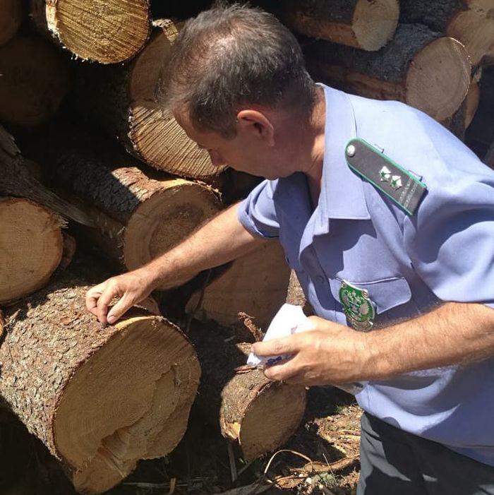 Из Тверской области с начала года на экспорт отправлено почти 300 тысяч кубометров древесины