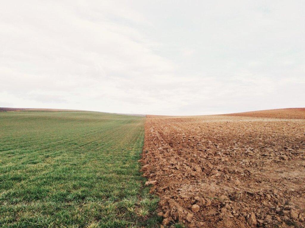 В Ржевском районе введено в оборот порядка 7 гектаров сельскохозяйственных угодий