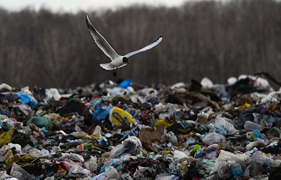 Несанкционированная свалка отходов отступила от города в Тверской области