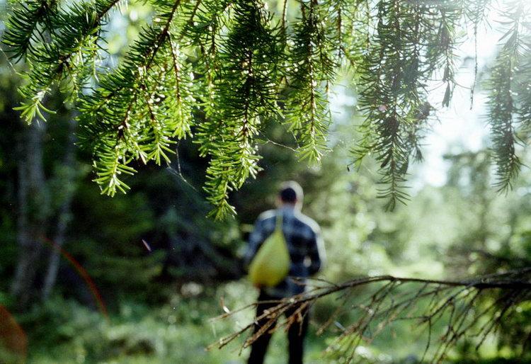 Доказать, что «Лес не без добрых людей», удастся жителям Твери на Всероссийском онлайн-марафоне