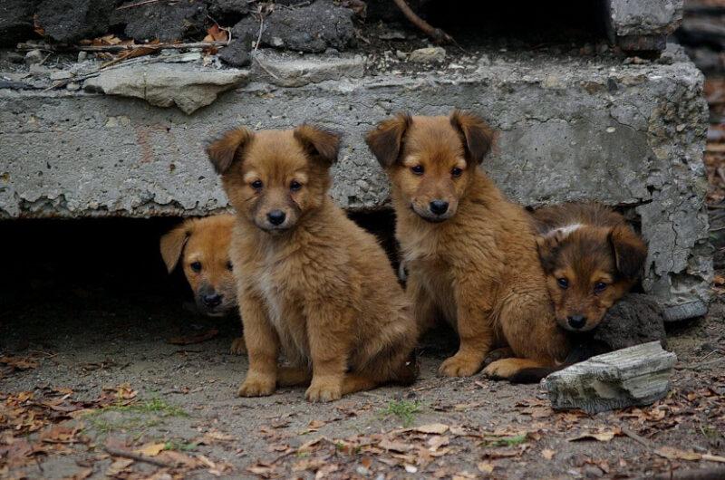 Игорь Руденя: Работа приютов будет направлена на размещение животных у новых владельцев