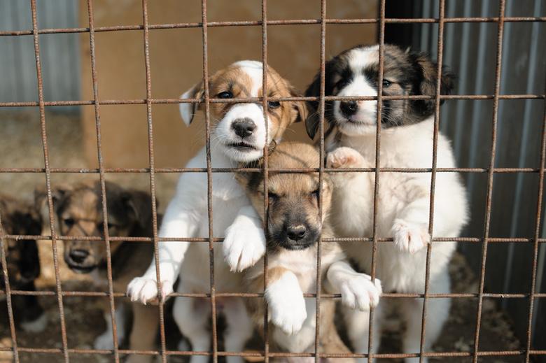 Инициатива создания сети приютов для животных в Тверской области привело Игоря Руденю региона врейтинг «Губернаторской повестки»по итогам прошедшей недели