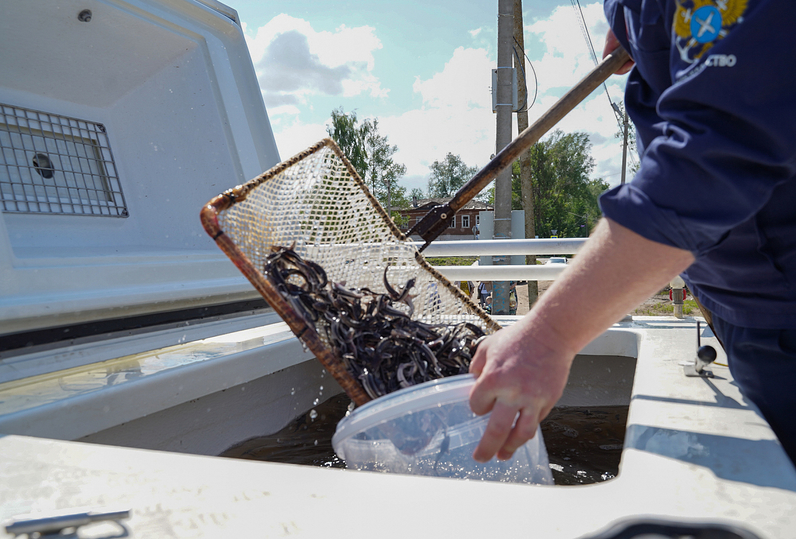 В Тверской области восстанавливают популяцию рыб