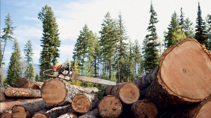 Двое жителей Тверской области вырубили деревьев на 4 миллиона