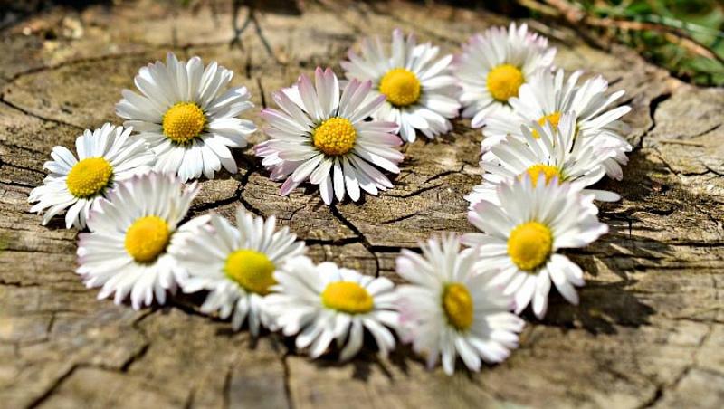"""ДК """"Затверецкий"""" приглашает отпраздновать День семьи, любви и верности"""