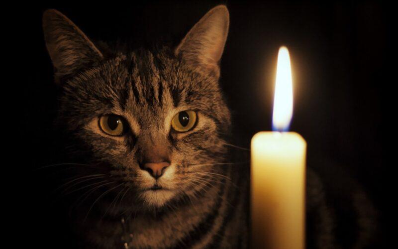 В понедельник в Осташкове отключат электричество