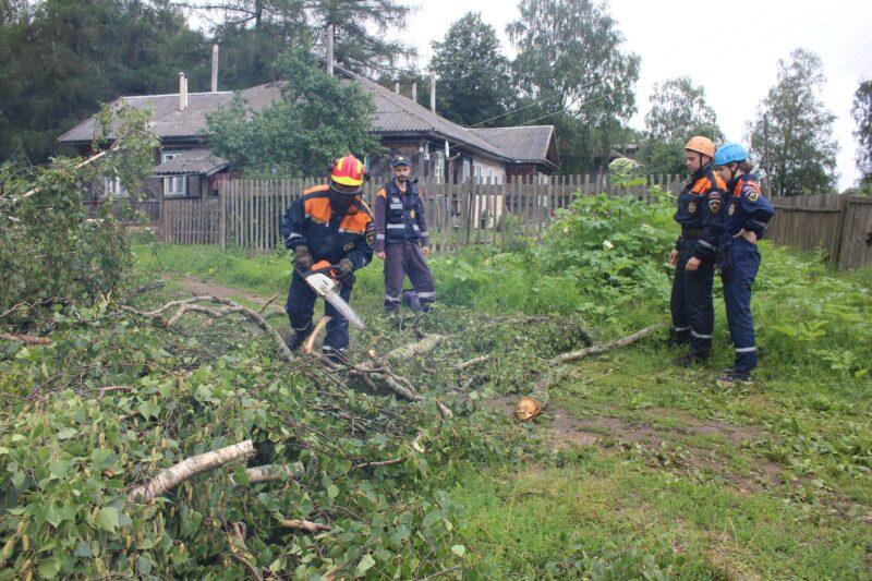В Тверской области волонтеры волонтеры помогли вывезти спиленное по указу президента дерево