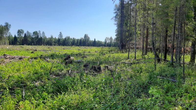 В Тверской области мужчина незаконно вырубал ели, березы и другие деревья