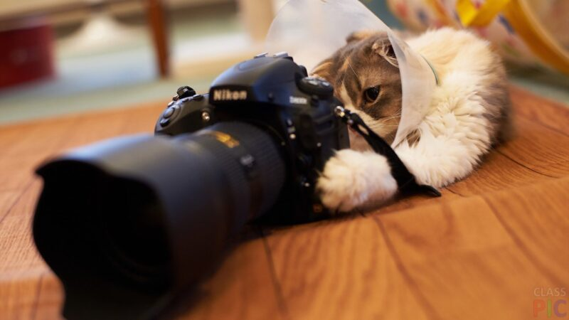 В Твери пройдет благотворительный фотодень в поддержку единственного в городе кошачьего кафе