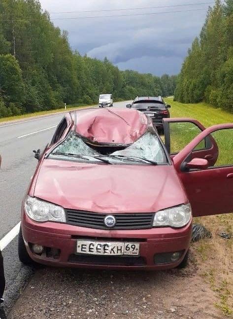 В Тверской области произошла очередная авария с участием лося