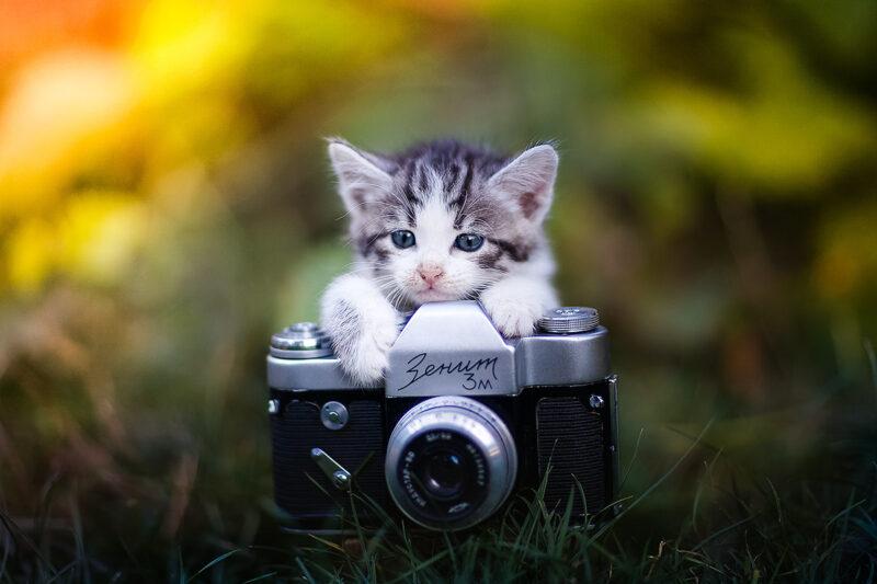 В Твери горожане смогут получить портреты с котами