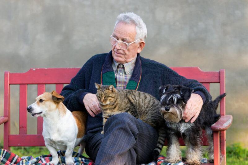 Пенсионерам, опекающих бездомных животных, помогут их стерилизовать