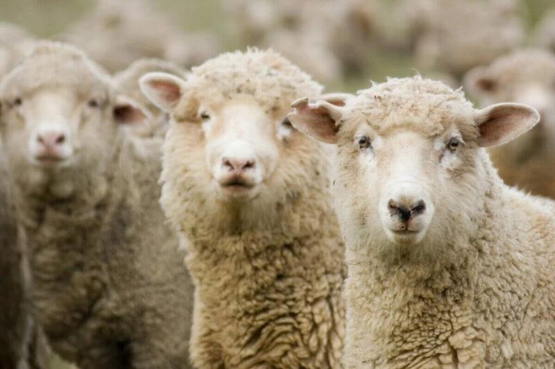 В Тверской области из-за проводов на мокрой земле убило скот