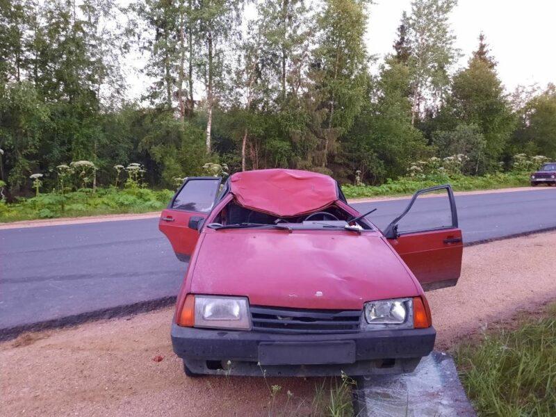 В Тверской области еще один лось погиб под колесами автомобиля