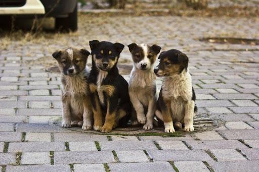 На территории Тверской области планируют внедрить современную систему обращения с безнадзорными животными