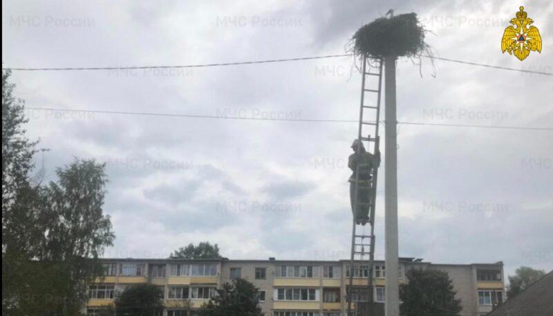 В Тверской области аистятам потребовалась помощь спасателей