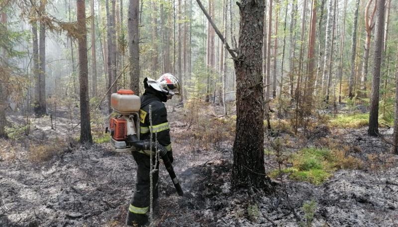 В Тверской области горела лесная подстилка