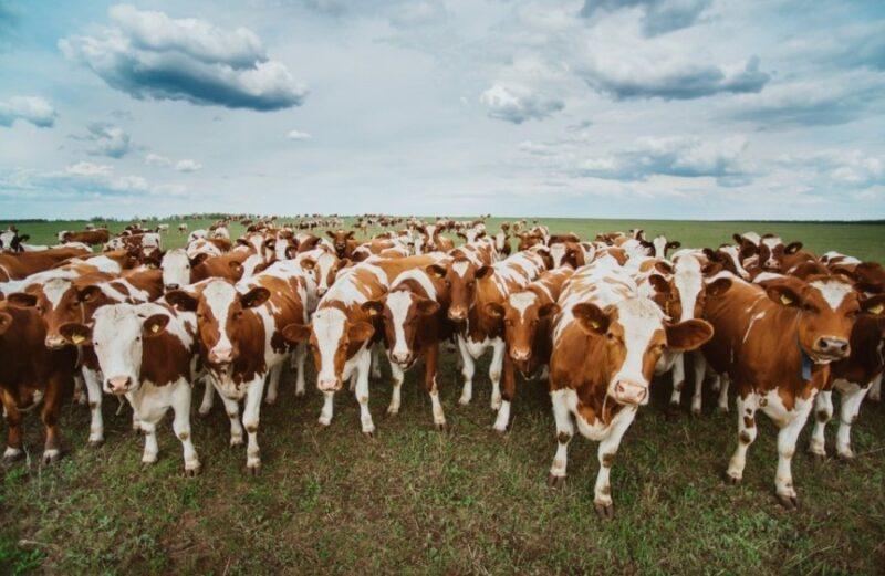 В Тверской области аграрии продолжают заготовку кормов для животноводства