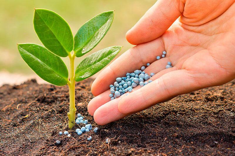 В России внедряется Федеральная государственная информационная система прослеживаемости пестицидов и агрохимикатов