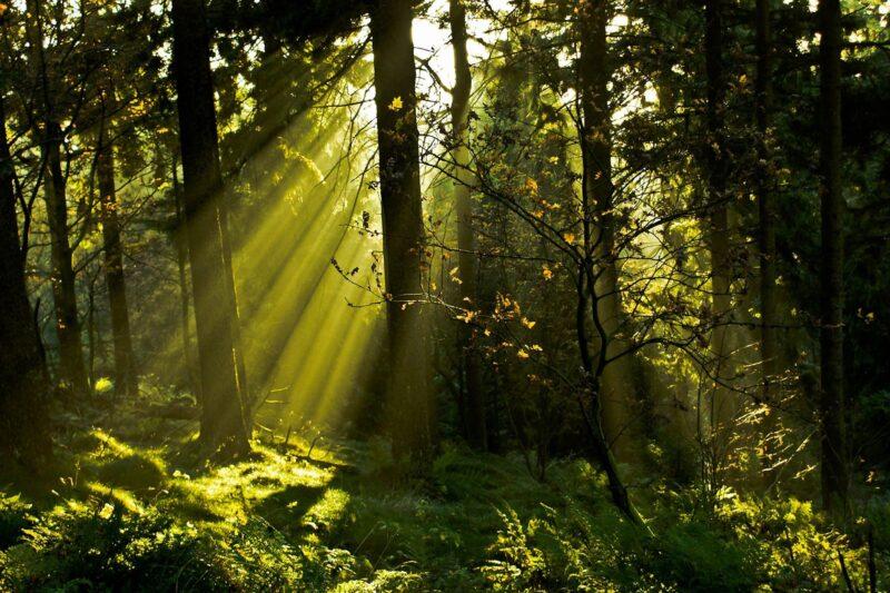 «Монастырский лес» в Тверской области теперь под охраной