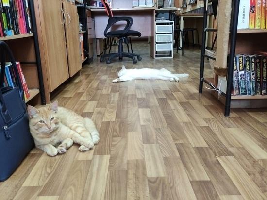 В библиотеку Тверской области пришел второй пушистый стажер