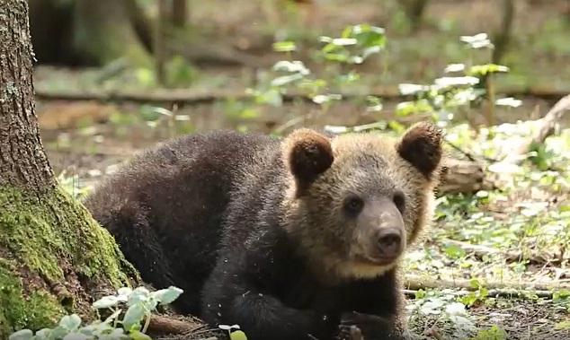 Центр спасения медвежат-сирот рассказывает о досуге косолапых