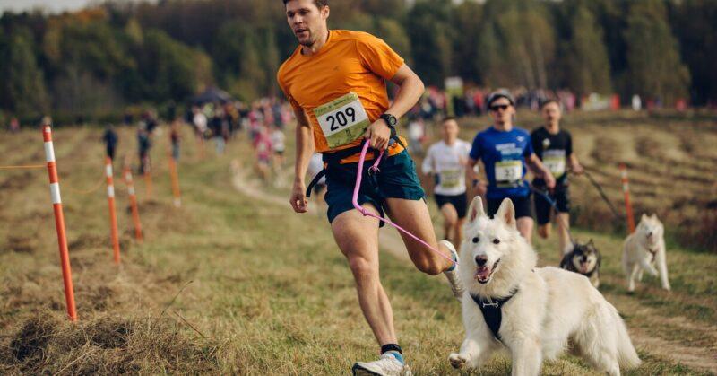 Быстрые и мохнатые: в Твери пройдёт благотворительный забег с собаками