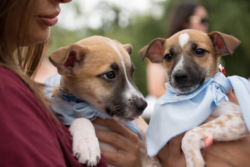 В Твери пройдет выставка-раздача бездомных животных