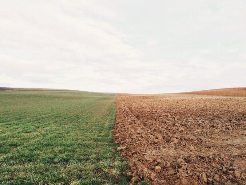 В Тверской области собственник не использует порядка 600 гектаров сельскохозяйственных угодий