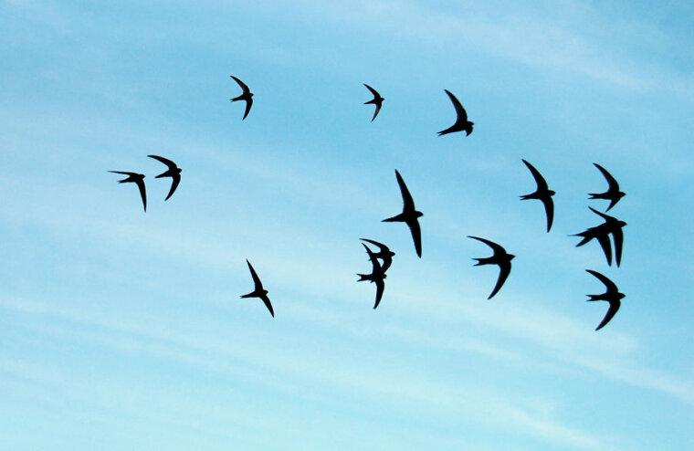 Жителей Тверской области приглашают присоединиться к Евразийскому учёту птиц