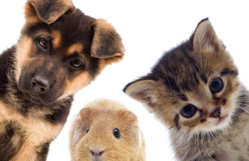 Тверская ветлаборатория диагностирует заболевания домашних животных