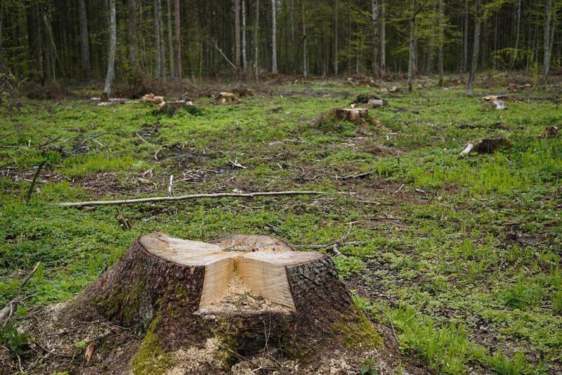 В Тверской области задержали нелегальных лесорубов