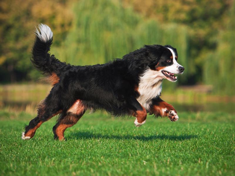 В Оленино стало больше площадок для выгула собак