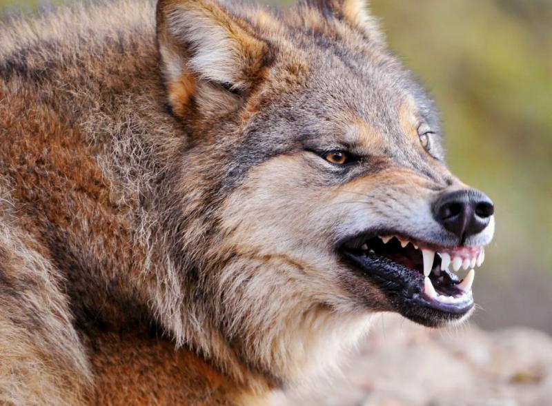 В Тверской области у животных обнаружили бешенство