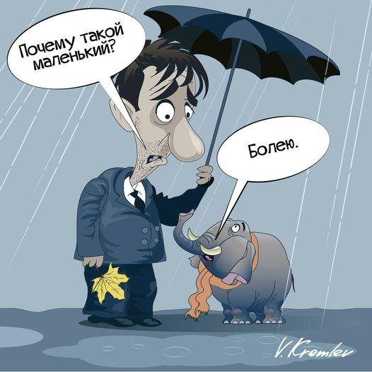 Карикатурист из Твери напомнил о Дне защиты слонов