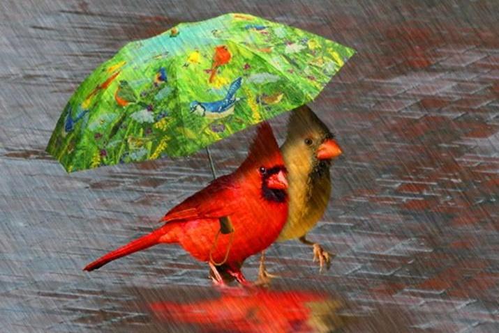 В выходной тверичан ожидает дождливая погода