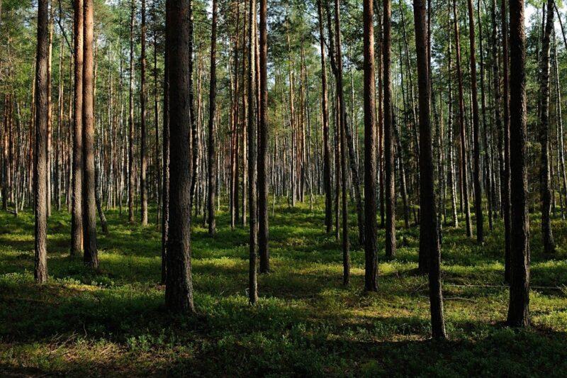 Тверская область планирует сохранить лидирующие позиции в ЦФО по лесовосстановлению