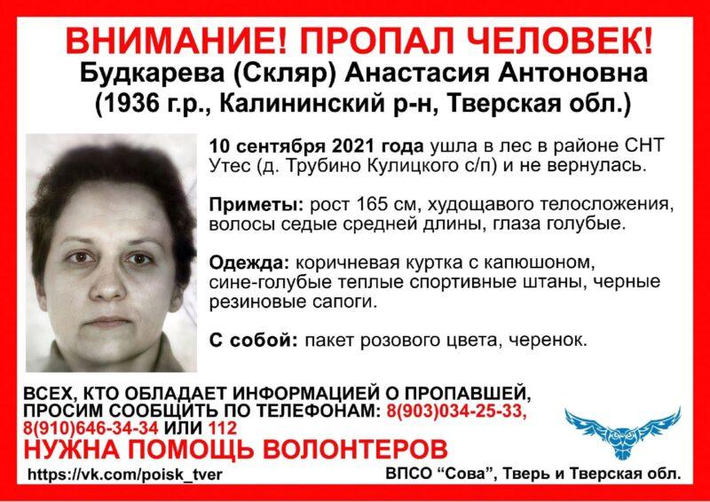 В Тверской области женщина ушла в лес и не вернулась
