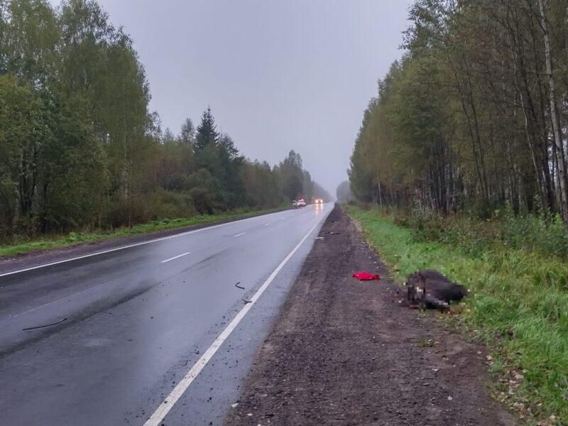 В Тверской области произошло еще одно ДТП из-за лося