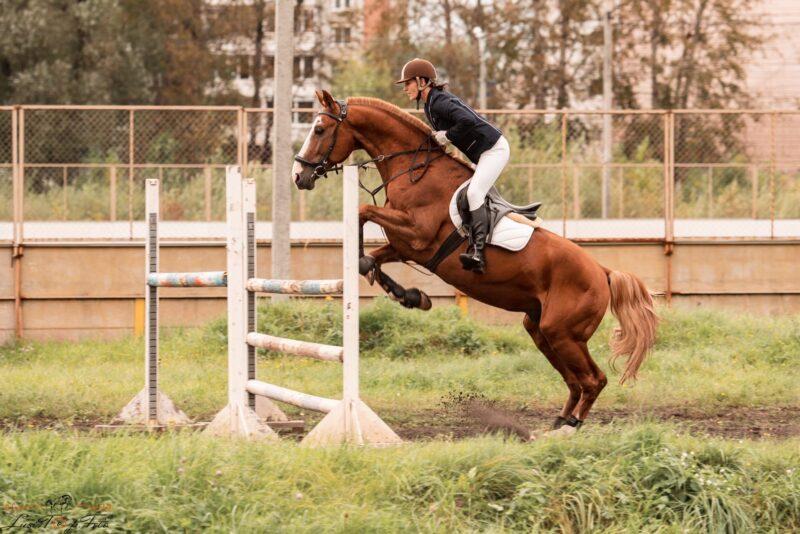 «День лошади на Тверском ипподроме» проходит в областной столице