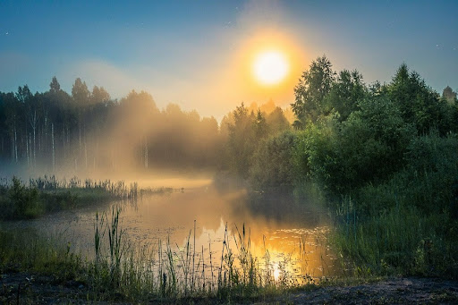 Жители Тверской области могут проверить свои знания о природе