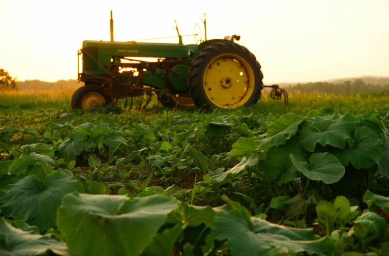 Глава региона поздравил работников сельского хозяйства с профессиональным праздником