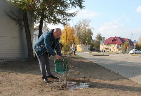 Площадь в Нелидово обогатилась сортовыми деревьями