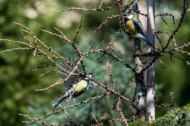 Жителям Тверской области предлагают понаблюдать за птицами