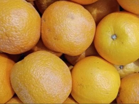 Специалисты проверили качество фруктов в тверских крупных сетевых гипермаркетах