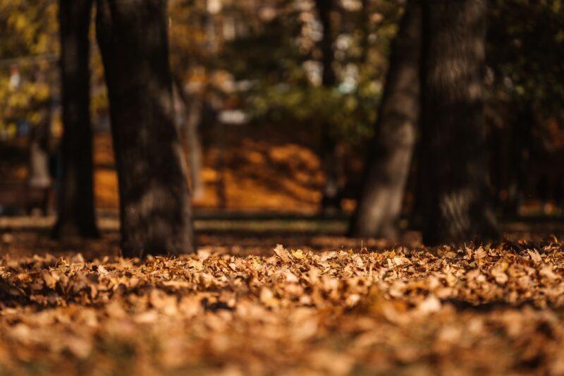 Тверской фотограф запечатлел золотую осень в городе
