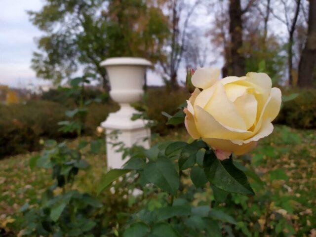 Сад Тверского императорского дворца будет закрыт для посещений