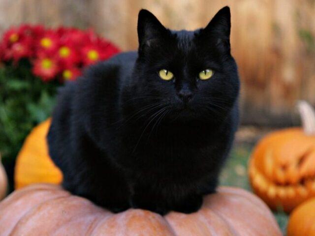 В Тверском котокафе состоится программа в честь Хэллоуина