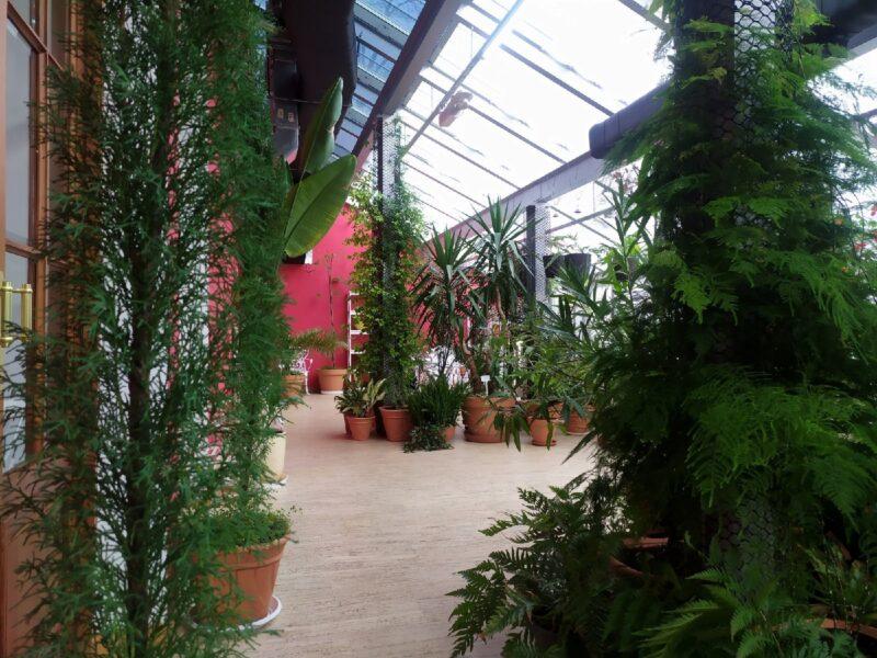 Зимний сад оранжереи Тверского императорского дворца вновь открыт для посещений